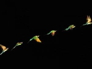 In Flight-Soar